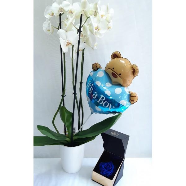 Ορχιδέα λευκή με μπαλόνι & forever rose blue navy