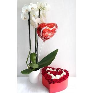 Ορχιδέα, Flowers Box & μπαλόνι